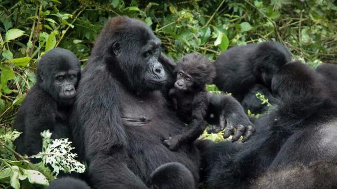 Những điểm thăm động vật thú vị nhất thế giới - 1