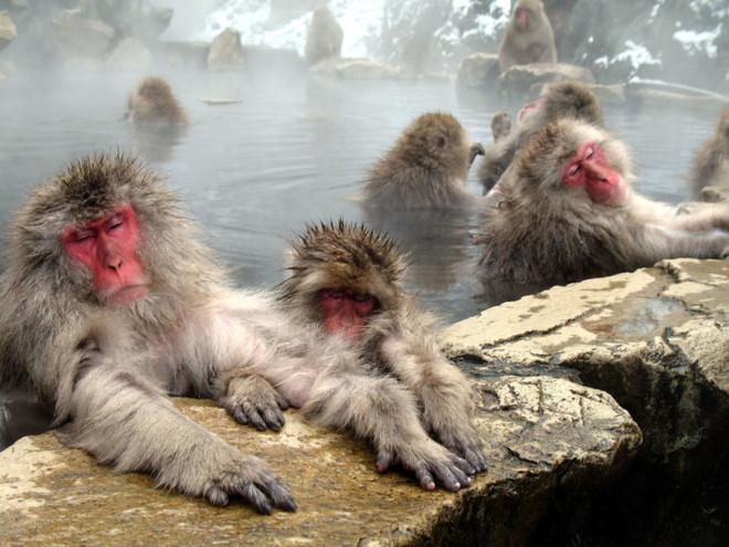 Những điểm thăm động vật thú vị nhất thế giới - 8