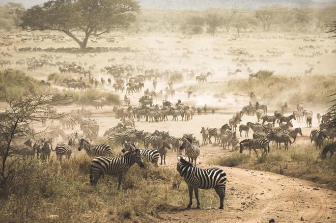 Những điểm thăm động vật thú vị nhất thế giới - 3