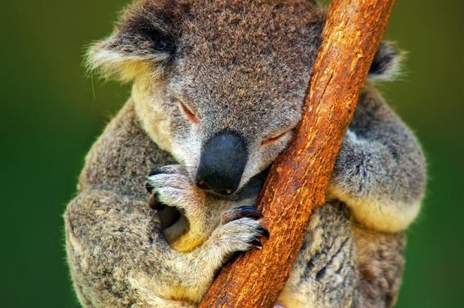 Những điểm thăm động vật thú vị nhất thế giới - 5