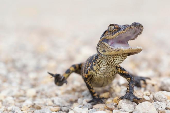 Những điểm thăm động vật thú vị nhất thế giới - 9