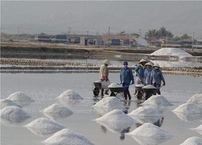 Ruộng muối trắng xóa bên vịnh vân phong - 3