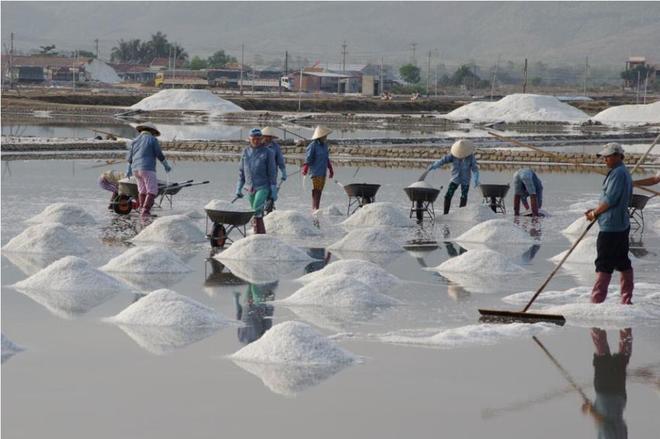 Ruộng muối trắng xóa bên vịnh vân phong - 5