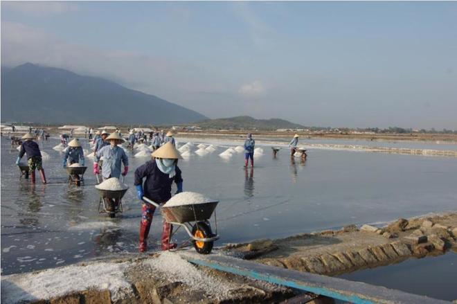 Ruộng muối trắng xóa bên vịnh vân phong - 6