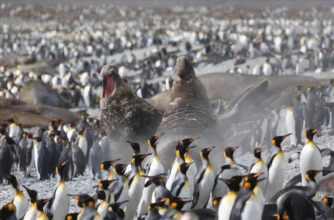 Vẻ đẹp ngoạn mục của thiên nhiên nam cực - 10
