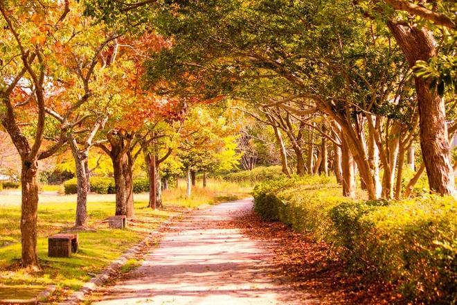 Vẻ đẹp thơ mộng mùa lá đỏ nhật bản - 2