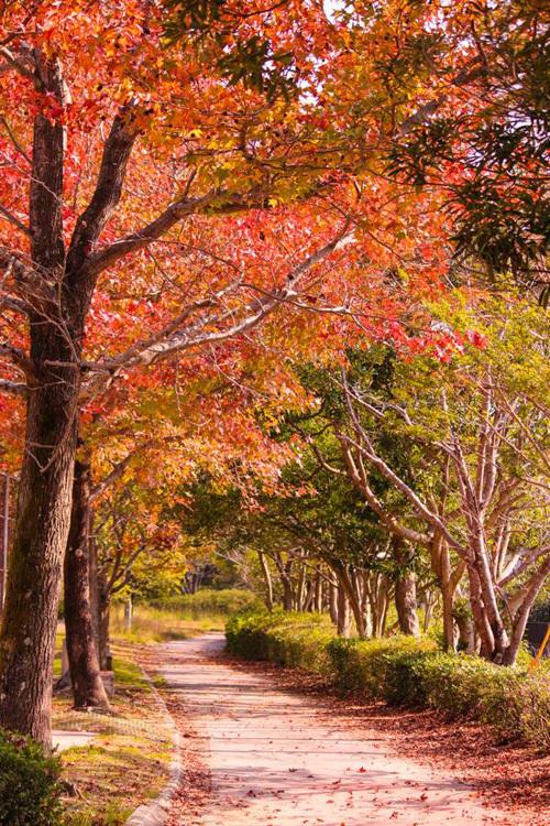 Vẻ đẹp thơ mộng mùa lá đỏ nhật bản - 3