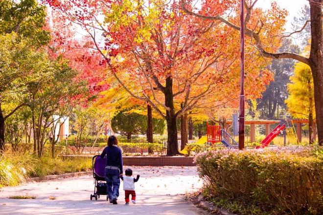 Vẻ đẹp thơ mộng mùa lá đỏ nhật bản - 4