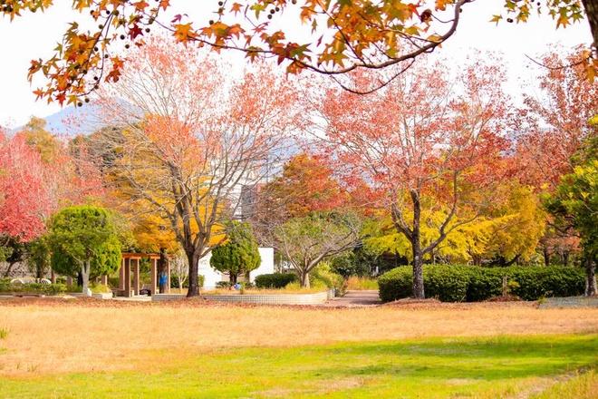 Vẻ đẹp thơ mộng mùa lá đỏ nhật bản - 6