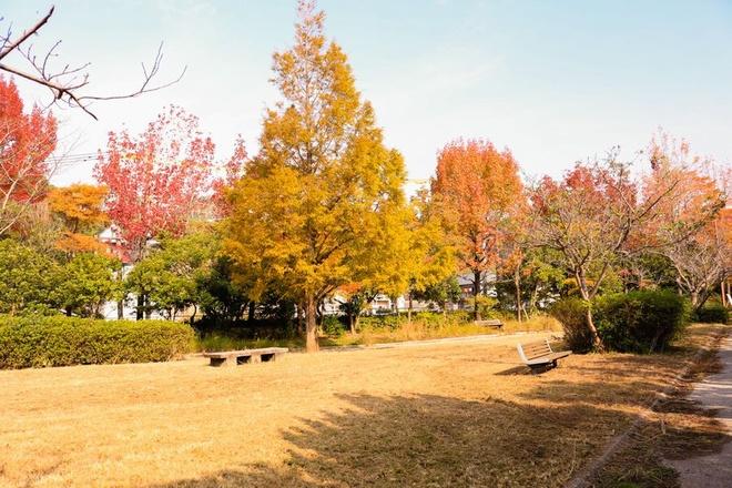 Vẻ đẹp thơ mộng mùa lá đỏ nhật bản - 7