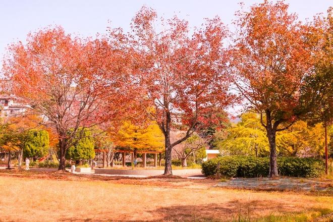 Vẻ đẹp thơ mộng mùa lá đỏ nhật bản - 9
