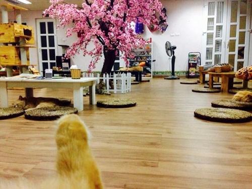 Quán cà phê của những chú chó mèo cực yêu ở hà nội - 3