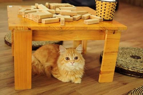 Quán cà phê của những chú chó mèo cực yêu ở hà nội - 5