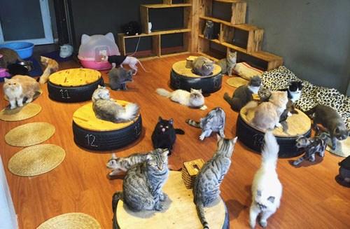 Quán cà phê của những chú chó mèo cực yêu ở hà nội - 6
