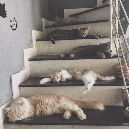 Quán cà phê của những chú chó mèo cực yêu ở hà nội - 7