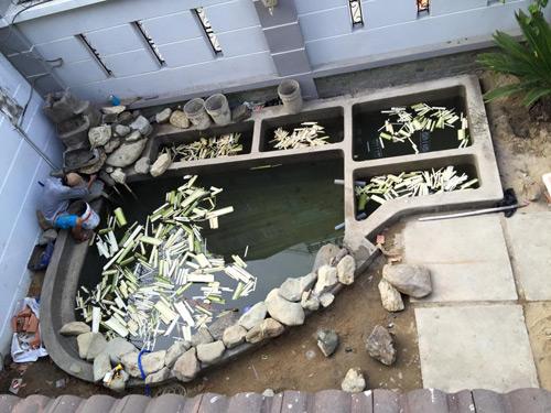 Cao thái sơn khoe hồ cá mới to như bể bơi - 10