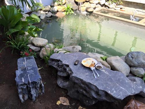 Cao thái sơn khoe hồ cá mới to như bể bơi - 18
