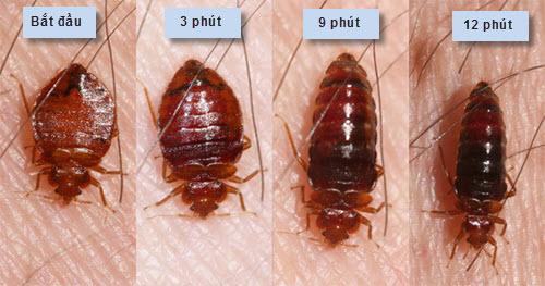 Bí quyết tiêu diệt rệp giường không dùng hóa chất - 2