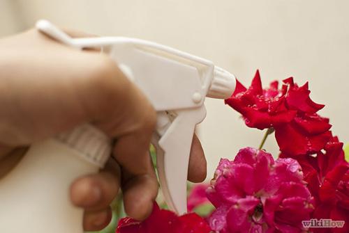 Muối nở giúp hoa hồng khỏe mạnh phọt nhanh - 7