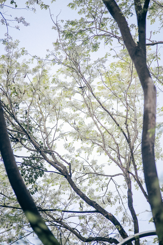 Hoa sưa nở rồi tiết trời nồm ẩm tháng 3 của hà nội cũng vì thế mà dịu dàng hơn - 4