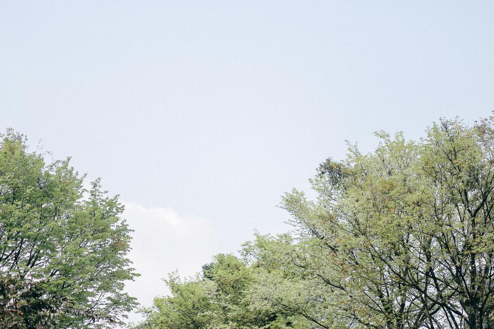 Hoa sưa nở rồi tiết trời nồm ẩm tháng 3 của hà nội cũng vì thế mà dịu dàng hơn - 6