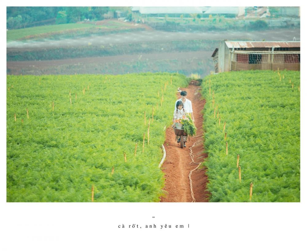 Ngoài cánh đồng cẩm tú cầu đà lạt còn có cánh đồng cà rốt khiến du khách ngỡ ngàng - 2