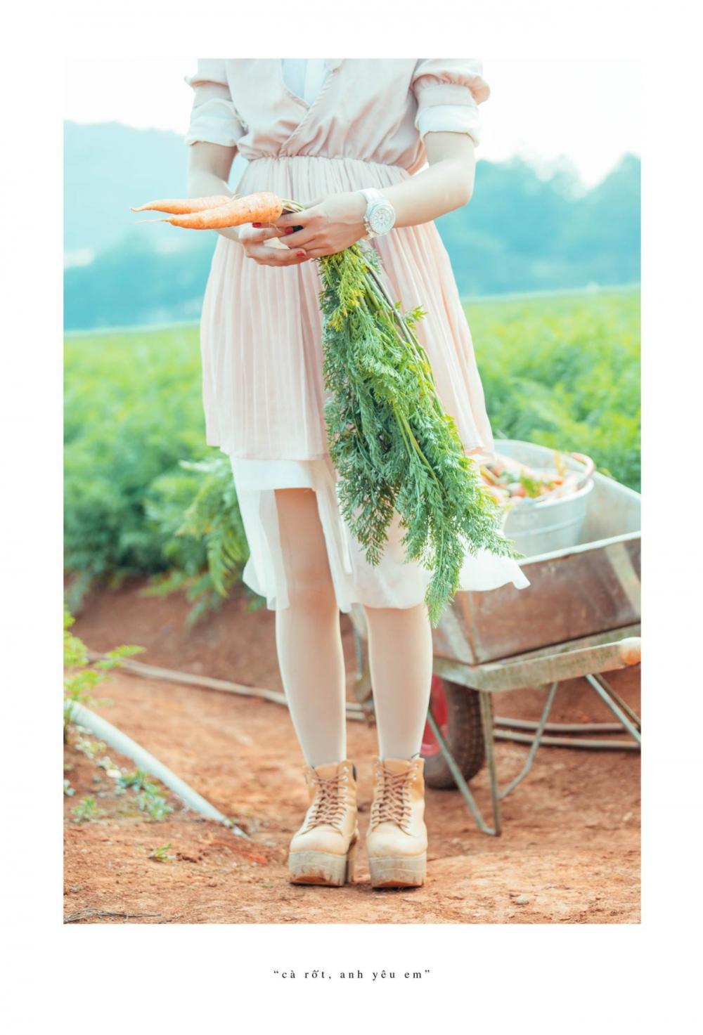 Ngoài cánh đồng cẩm tú cầu đà lạt còn có cánh đồng cà rốt khiến du khách ngỡ ngàng - 12