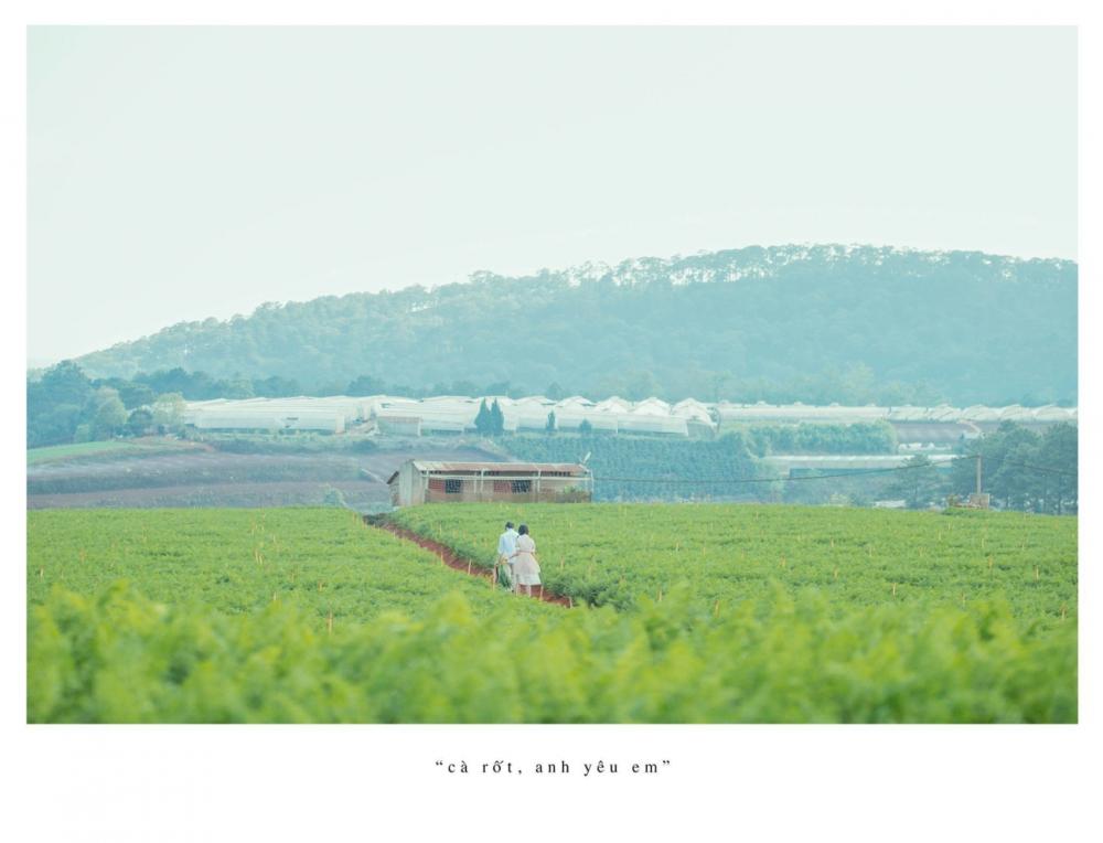 Ngoài cánh đồng cẩm tú cầu đà lạt còn có cánh đồng cà rốt khiến du khách ngỡ ngàng - 18