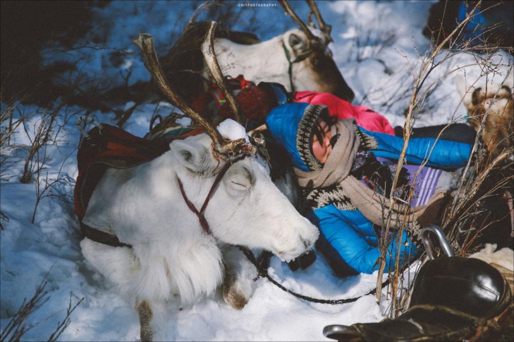 Nhiếp ảnh gia 8x và hành trình 15 ngày đi tìm bộ lạc tuần lộc cuối cùng ở mông cổ - 3